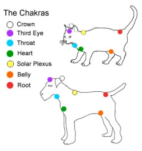 Dog.Cat Reiki